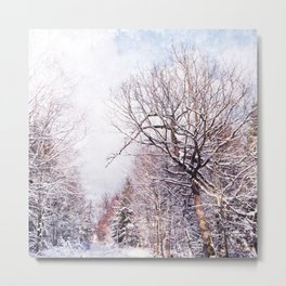 winter trees in sunlight Metal Print