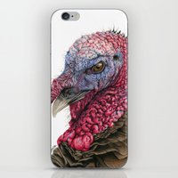 turkey iPhone & iPod Skins featuring The Turkey by Sarahphim Art