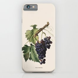 Black Grape Antique Botanical Illustration iPhone Case