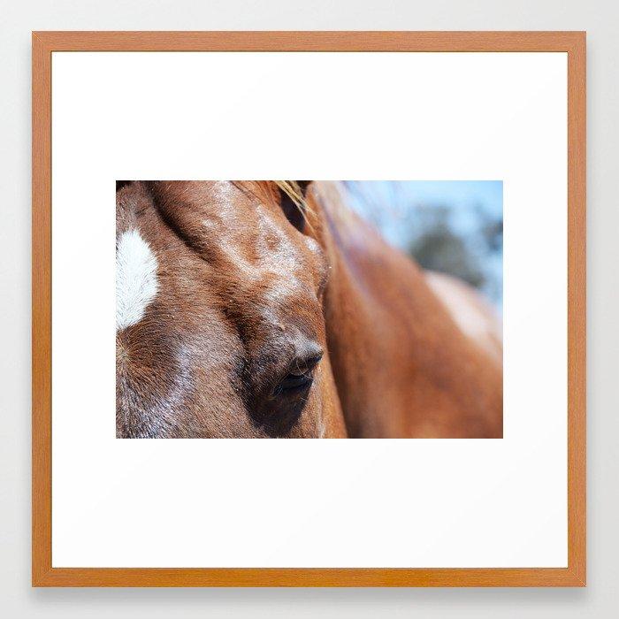 Horse 4 Framed Art Print