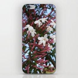 Pink Buds and Jasmine Blossom Close Up iPhone Skin