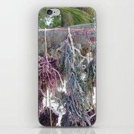Drying Seaweed iPhone Skin