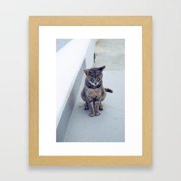 kitty in the island Framed Art Print