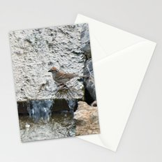 Water (Chipping Sparrow) Stationery Cards