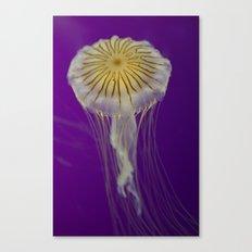 La méduse solitaire Canvas Print