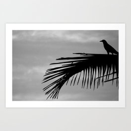 Bird silhouette with palm tree leaf in the Caribbean Art Print