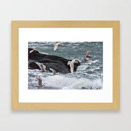 Gulls shop for Dinner Framed Art Print