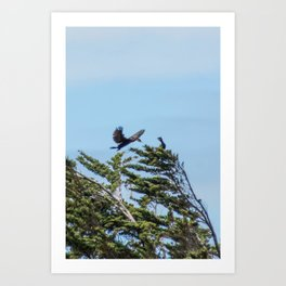 Little Black Shags Art Print