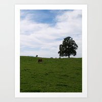 cows Art Prints featuring Cows by Natalie Reed