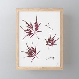 Autumn Acer Framed Mini Art Print