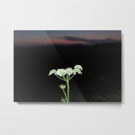 Sunset Macro Flower Metal Print