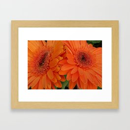 "Daisy flowers (Marguerite) "" Love is only what you need"" Framed Art Print"