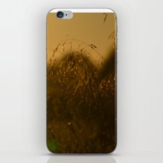 Delicate Grasses and Dew iPhone & iPod Skin