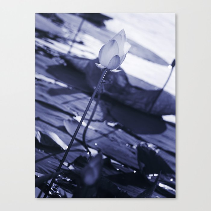 Water Lily Blue Canvas Print