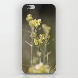 Closeup of Desert Milkweed Sunnyland Estates iPhone Skin