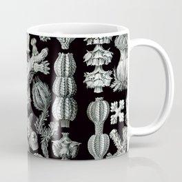 Ernst Haeckel - Gorgonida Coffee Mug