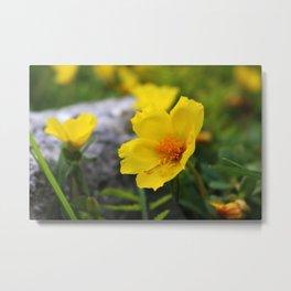 Yellow Buttercup Flower Metal Print