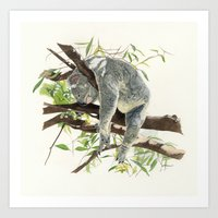 koala Art Prints featuring Koala by Patrizia Donaera ILLUSTRATIONS