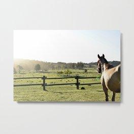 Criollo Horse Metal Print