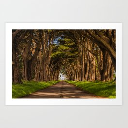 Cypress Tree Tunnel Art Print