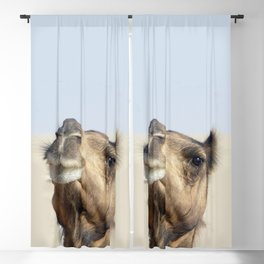 Moroccan dromedary camel Blackout Curtain
