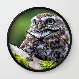 owl in green Wall Clock