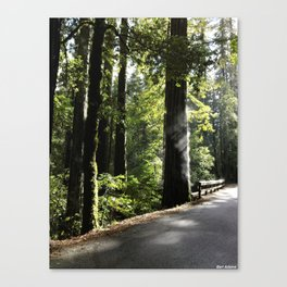 Misting Redwoods Canvas Print