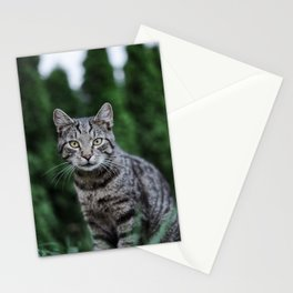 Cat by Leonie Photograph Stationery Cards
