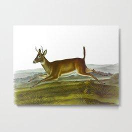 Long-tailed Deer Metal Print