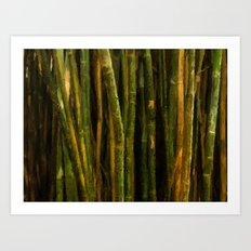 Bamboo Dreams Art Print