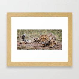 Posing for the picture Framed Art Print