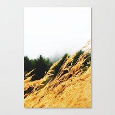 Amber Waves Canvas Print
