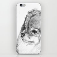 pomeranian iPhone & iPod Skins featuring Pomeranian by Doggyshop