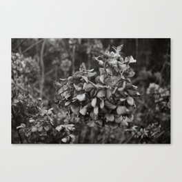 Wilted Canvas Print