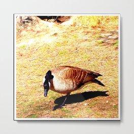 River Ducks 104 Metal Print