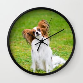 Portrait of a papillon purebreed dog sitting on the grass Wall Clock