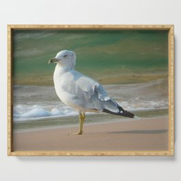 Ring-billed Gull Serving Tray