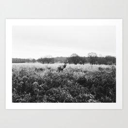 Richmond Park Deer - London - Nature photography Art Print