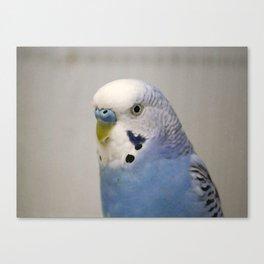 Blue Parakeet Canvas Print