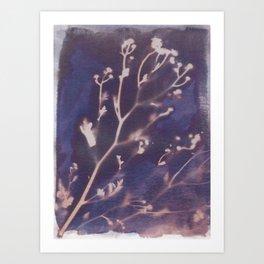 Cyanotype No. 12 Art Print