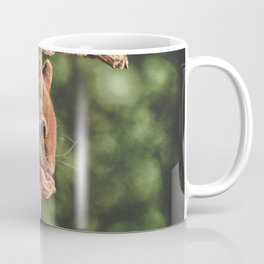 Foraging Squirrel in Little House Coffee Mug