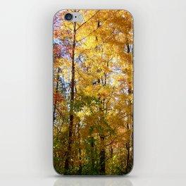 Peek through the Trees iPhone Skin