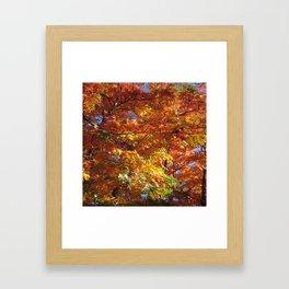 Fallbeauty/Autumn foliage Framed Art Print