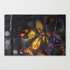 Sun leaves Canvas Print