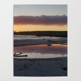 Carmel Sunset--Dalmatian, Ducks, and Kelp Poster