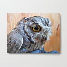 Western Screech Owl profile Metal Print