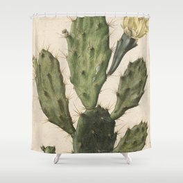 Herman Saftleven - Blooming prickly pear cactus (1683) Shower Curtain