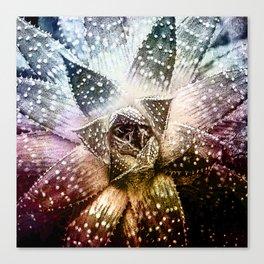 Twilight Cactus Flower Canvas Print