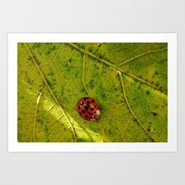 Ladybug Print Art Print