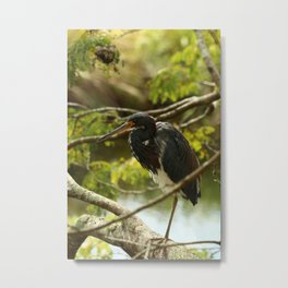 Tricolored At Rest Metal Print